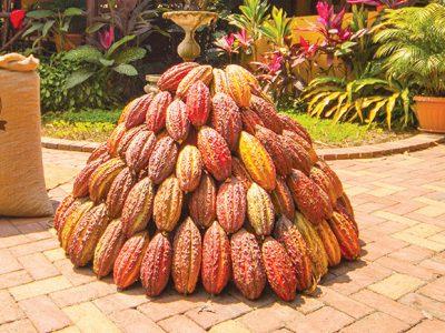 Galería Cacao