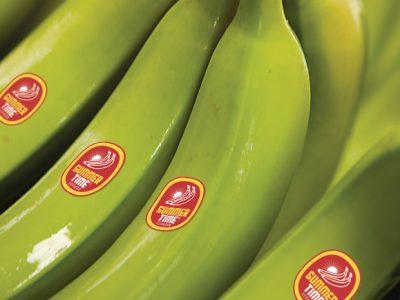 Galería Banano