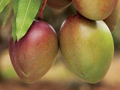 Galería Mango